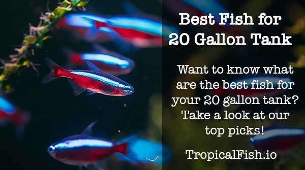 Best Fish for a 20 Gallon Tank