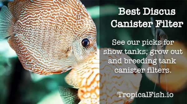 best canister filter for discus fish tanks