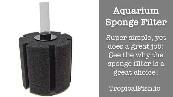 Aquarium Basics: The Sponge Filter for Fish Tanks