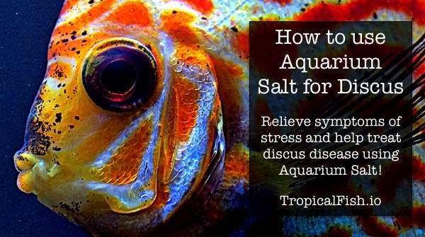 How to use Aquarium Salt with Discus Fish
