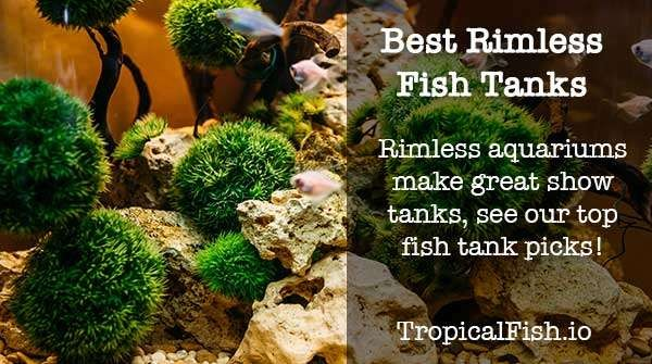 Best Rimless Aquarium Fish and Reef Tanks