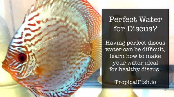 Best Water Parameters for Discus Fish