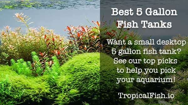 Best 5 Gallon Fish Tanks and Aquarium Kits