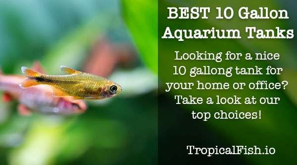 Best 10 Gallon Fish Tanks and Aquarium Kits