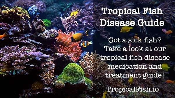 tropical fish disease medication treatment guide