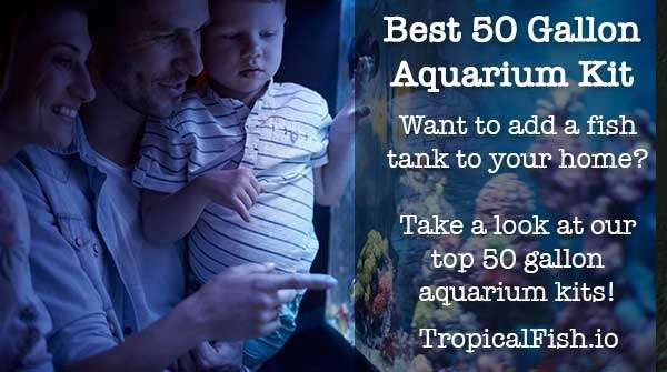 Review of Best 50-55 Gallon Aquarium Kits