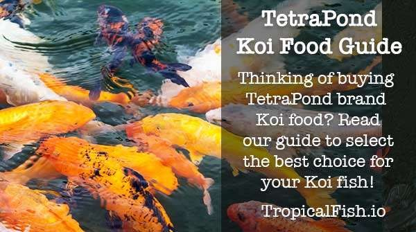 Definitive Guide to TetraPond Koi Food