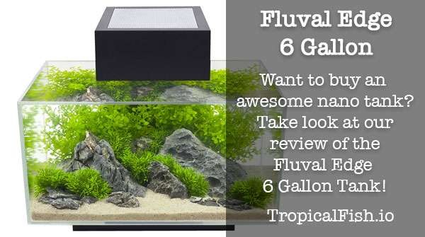 Review of the Fluval Edge 6 Gallon Aquarium
