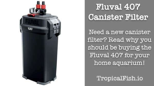 Why the Fluval 407 Canister Filter is perfect for your aquarium!