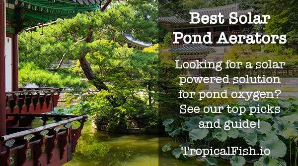 Best Solar Powered Pond Aerator