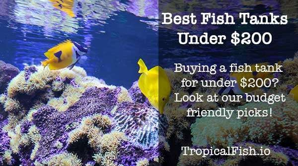 Best Fish Tanks Under $200