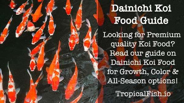 Dainichi Koi Food Review Guide