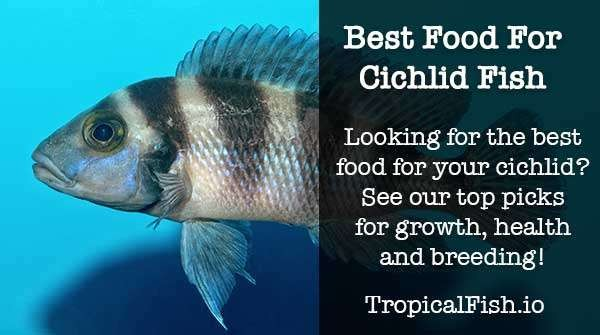 best cichlid food