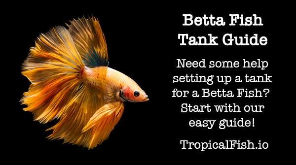 Betta Fish Tank Beginners Guide ( Read Before You Buy )
