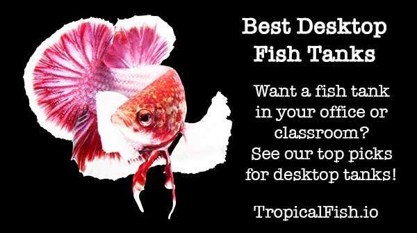 Best Desktop Aquarium Fish Tanks ( updated 2019 )